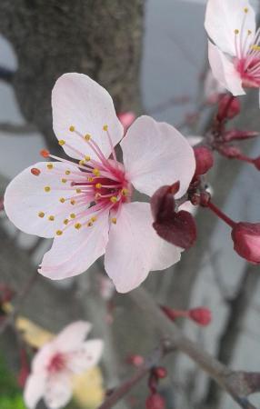 flores-primavera