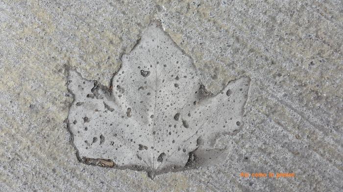fosilhoja
