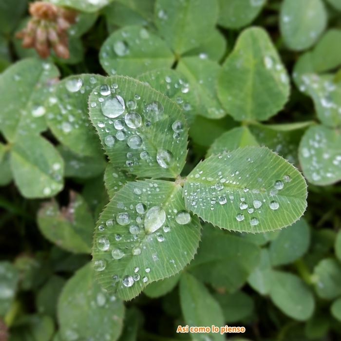 ducha maturina verde