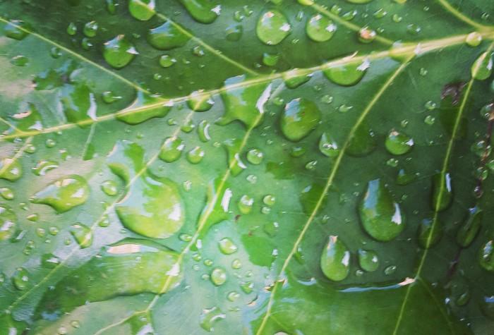 lluvia verde
