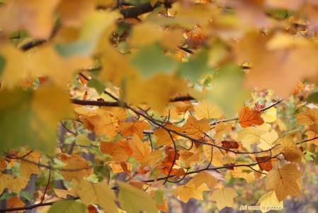 arboles-de-otoño