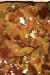 hojas-de-otoño