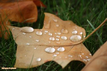 hoja-en-otoño