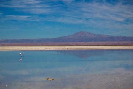 Laguna Chaxa - Atacama