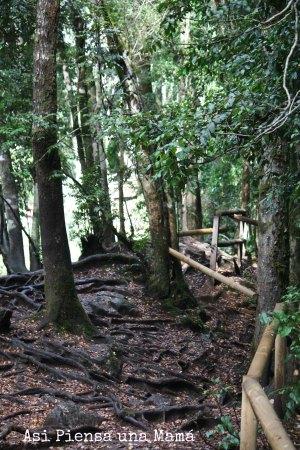escaleras-de-troncos
