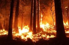 wildfire-incendio-bosque-pixabay