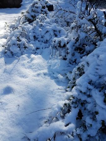 Arboles-nevados-santiago