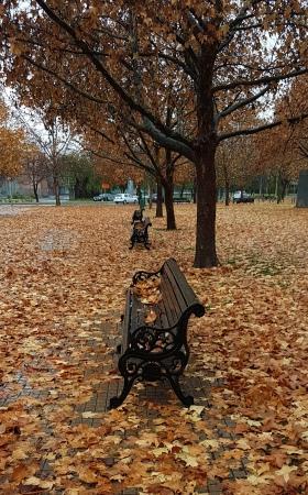 bancos-otoño-lluvia