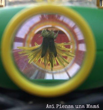 flor-microscopio-abajo