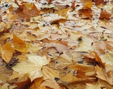 gota-otoño