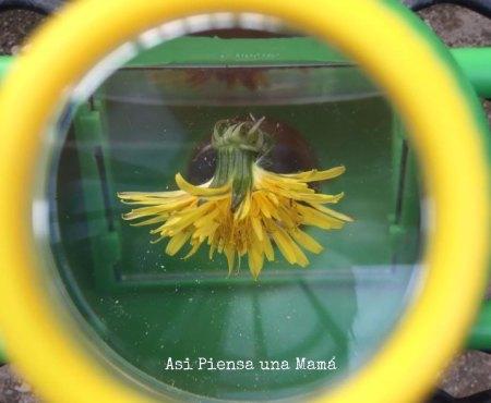 microscopio-flor-naturaleza