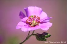 detalle-flor-desierto-atacama