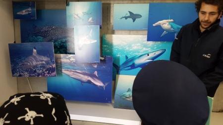 tiburons-cram