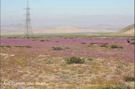 vista-desierto-florido