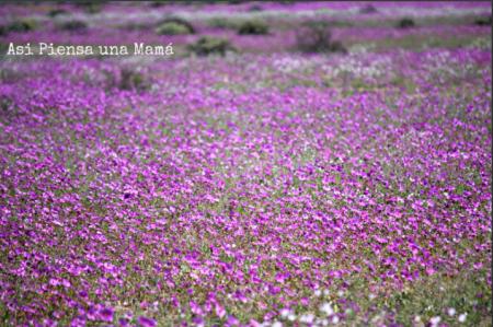 vista-flores-ruta-interior-atacama