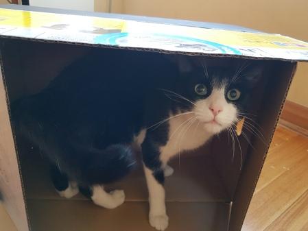 caja-calendario-casa-gato