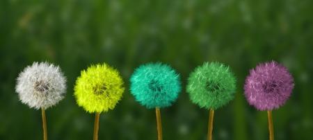 dientes-leon-colores-mindfulness